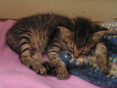 Our kitten