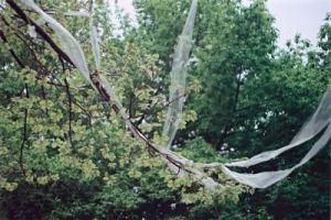 Plastic trash on tree, how sad