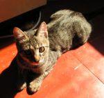 Kitten pic June 08